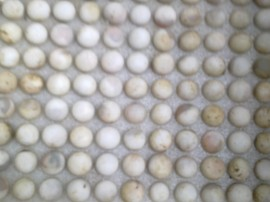 trứng ba ba sắp nở